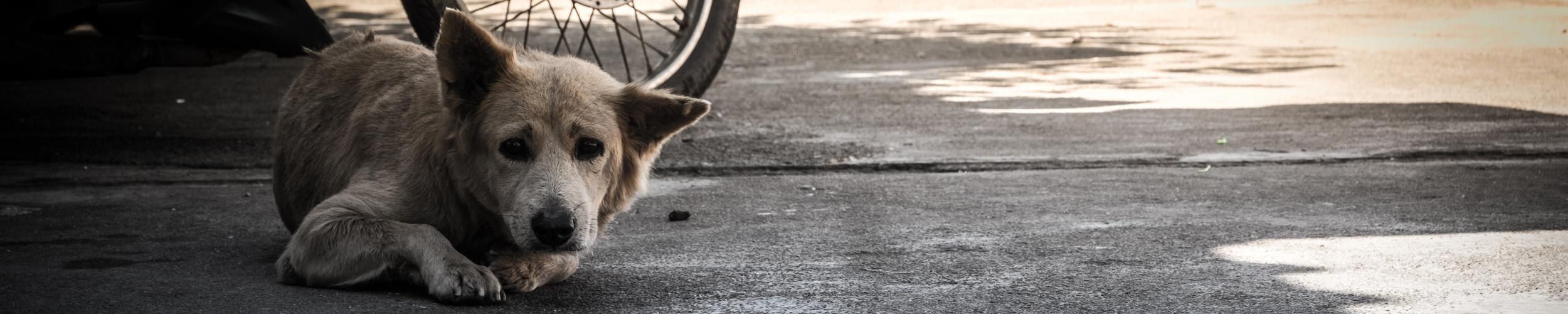 Zwerf- of verloren dieren